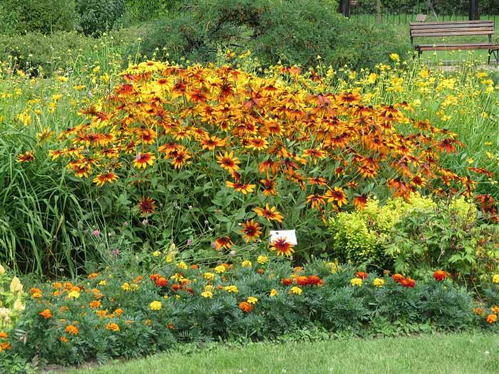Цветы сокольники